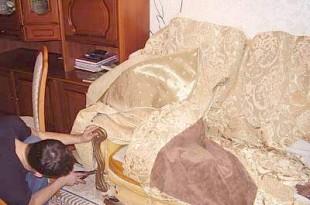 Ремонт мягкой мебели с выездом на дом